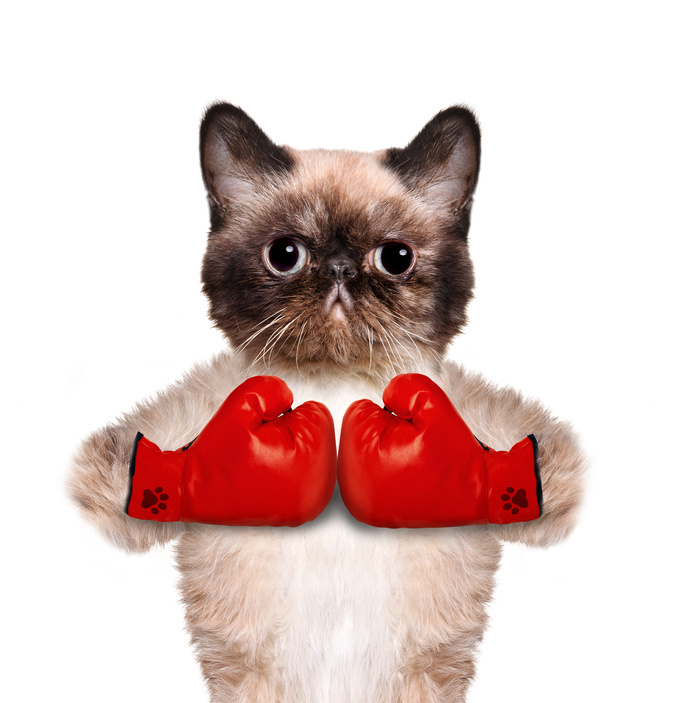 cat with big red gloves